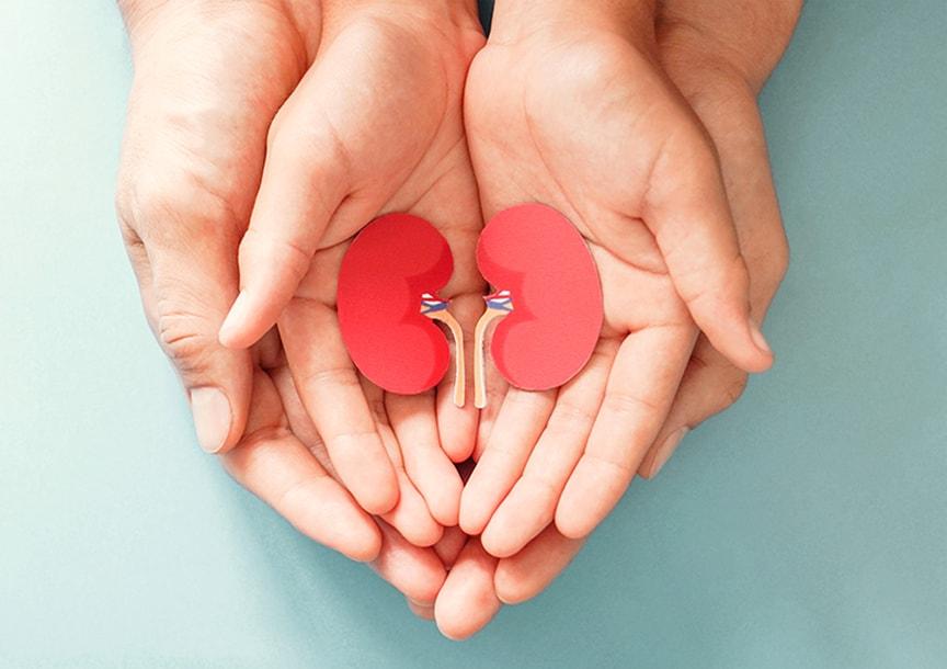 Трансплантация на бъбрек (бъбречна трансплантация)